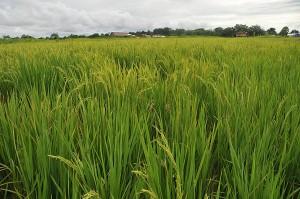Nuevo método para el calcular impacto ambiental de biocombustibles en Colombia
