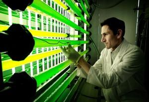 El sistema desarrollado permite capturar el CO2 de gases de combustión y aprovecharlo en el cultivo de microalgas.