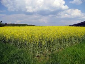 cae la producción mundial de biocombustibles