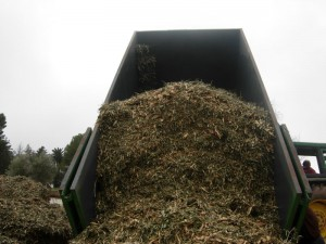 Biomasa del olivar