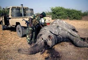 los delitos contra el medio ambiente generan miles de millones de dólares