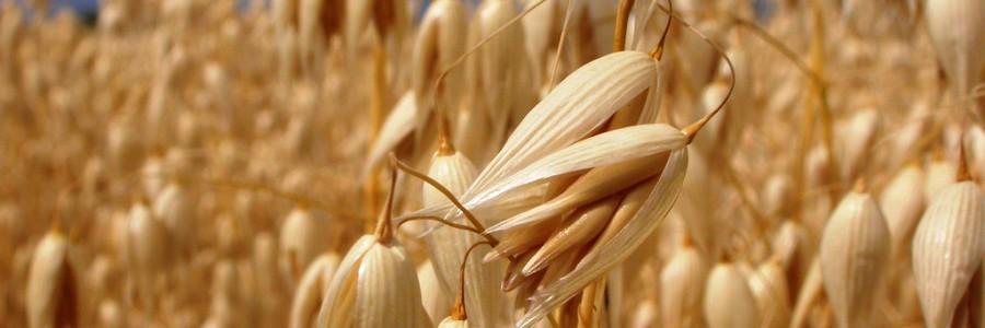 Aprovechamiento de residuos de cereal para mejorar las propiedades de los envases biodegradables