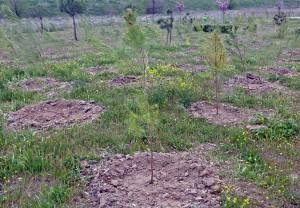Mil nuevos árboles en el tercer bosque SIGAUS