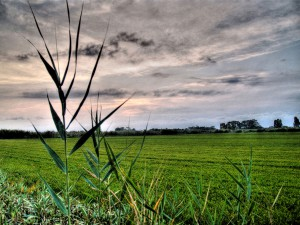 El proyecto SOSTRICE obtendrá energía y nutrientes de los residuos de arroz