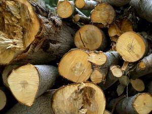 Cuenca impulsa la construcción de una central de biomasa que generará energía a partir de subproductos madereros
