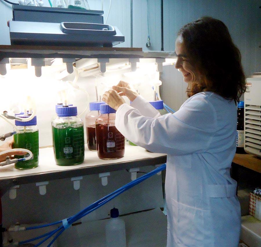 biodiesel a partir de microalgas pdf