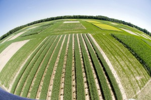 La UE quiere limitar el uso de cultivos alimentarios para producir biocombustibles