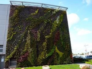 Los paneles biodegradables a partir de residuos agrícolas y micelio de hongo pueden servir como soporte de jardines verticales