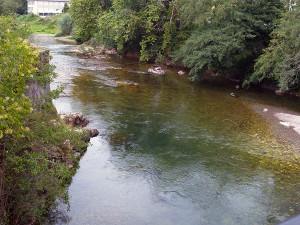 La identificación de la especie a la que pertenecen los restos ayudaría a resolver los conflictos sobre quién es el responsable de la contaminación fecal de un río
