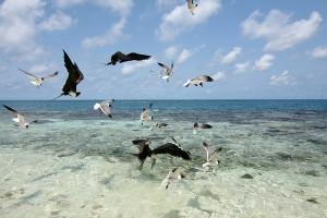 Las aves confunden los plásticos con comida