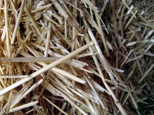 Patentan un método de valorización de residuos agrícolas para obtener aceites