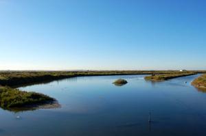 El proyecto se centra en el estudio del papel de los ecosistemas marinos como sumideros de CO2