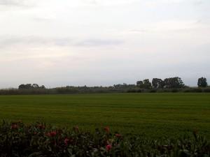 La planta aprovechará la paja de arroz para producir biogás y biofertilizantes