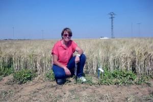 Una tesis demuestra los beneficios del compost frente a los fertilizantes inorgánicos
