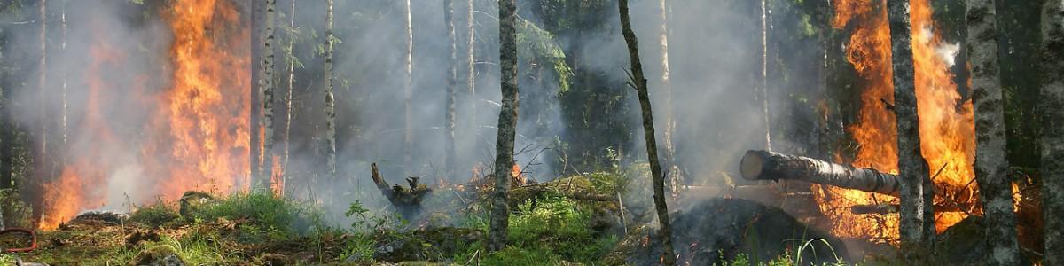 Extraer biomasa para prevenir incendios forestales