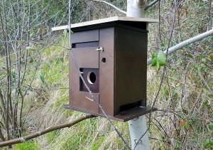Convierten viejas cajas de puros en nidos para pájaros