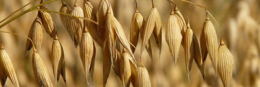 Investigan el uso del furfural como alternativa para producir biocombustibles