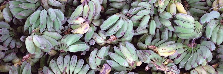 Bioenergía a partir de los residuos del plátano