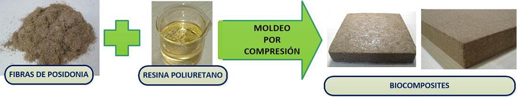 Proceso de obtención de laminados y materiales aislantes a partir de fibra de posidonia oceánica y resina de poliuretano.