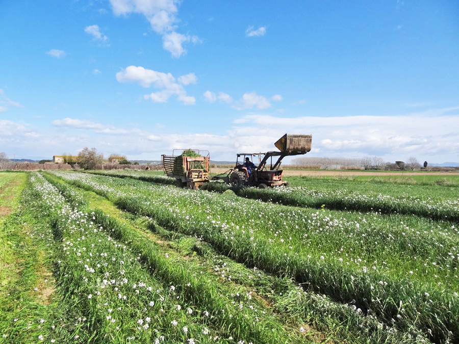 El IRTA trabaja en el proyecto europeo Futur Agrari para la gestión de las deyecciones ganaderas.