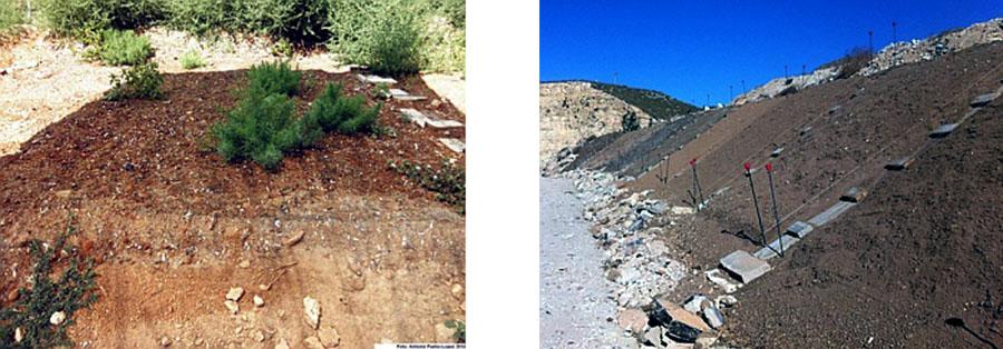 Un proyecto de la Universidad de Alicante usa posidonia iceánica en la restauración de vertederos