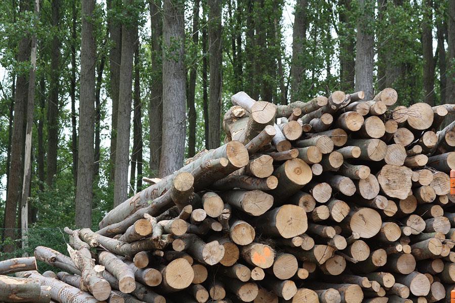 APPA Biomasa pide subastas específicas para su tecnología