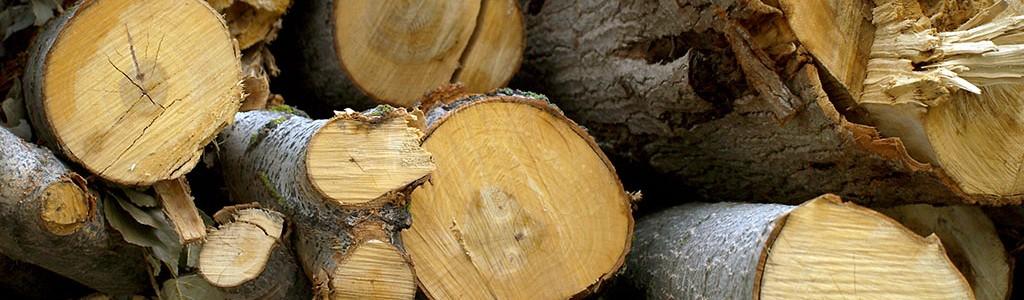 La generación de energía con biomasa se estanca por los cambios regulatorios