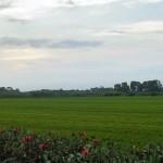 Neiker desarrolla un eficaz fertilizante a partir de residuos orgánicos