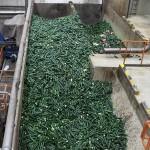 El valor de los residuos vegetales: bioenergía y nuevos alimentos