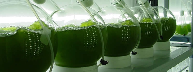 El proyecto europeo CYCLALG reúne a seis centros tecnológicos para desarrollar una biorrefinería a base de algas