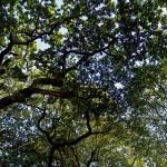 ¿Cuánto CO2 pueden capturar los montes de Galicia y Asturias?