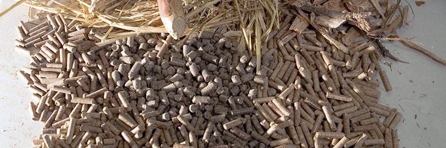 Investigan distintos tipos de biomasa para generar gas de síntesis