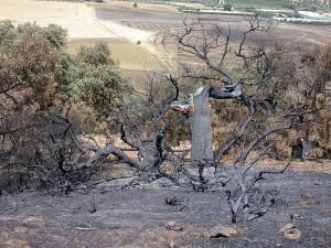 suelos quemados