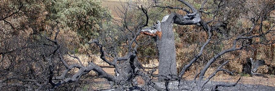 Proponen usar paja como medio eficaz para recuperar suelos afectados por incendios forestales