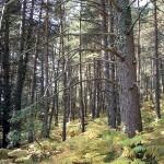 La Comunitat Valenciana ordenará 18.000 hectáreas de bosque para obtener biomasa
