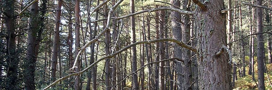 600.000 toneladas de biomasa se podrían aprovechar energéticamente en Aragón cada año