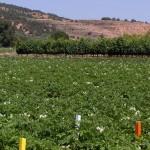 Analizan la capacidad fertilizante de diferentes residuos orgánicos