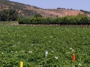 Los residuos orgánicos aplicados dieron resultados satisfactorios