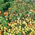 Lanzan una guía para reducir el desperdicio de alimentos en los hogares gallegos