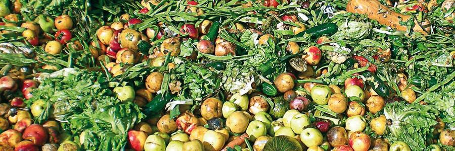 El medio ambiente, otra víctima del desperdicio de alimentos