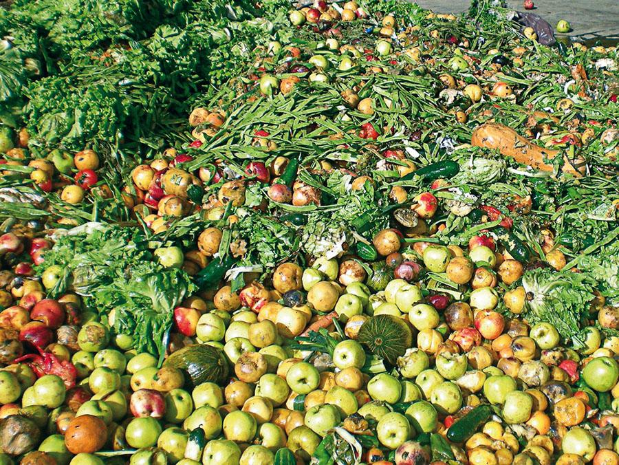 El medio ambiente, otra víctima del desperdicio de alimentos - Residuos  Profesional