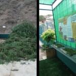 Las Palmas de Gran Canaria reutilizará sus residuos vegetales en el mantenimiento de zonas verdes