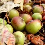 Tesco se marca como prioridad reducir los residuos alimentarios en toda la cadena de suministro