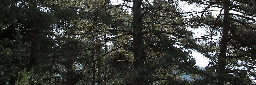 Majadahonda albergará el segundo 'Bosque Sigaus'