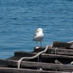 Al menos 12 de las 18 rías gallegas están contaminadas por el cobre de los astilleros