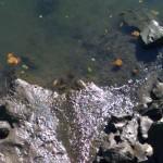 Desarrollan un método innovador para tratar aguas contaminadas con residuos de crustáceos