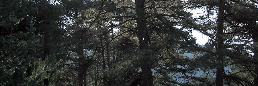 Primer proyecto de compensación forestal en España bajo estándares del Mercado Voluntario de Carbono