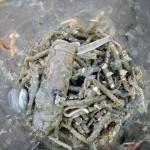 Barcelona acoge una reunión sobre los impactos de la basura marina