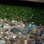 Residuos envases plásticos no gestionados contribuyen a propagación del dengue en Costa Rica