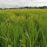 Nuevo método para calcular el impacto ambiental de biocombustibles en Colombia